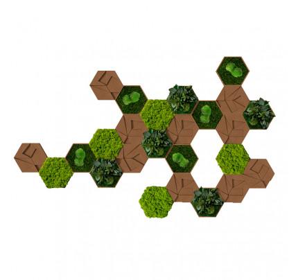 Moswand Hexagon set van 25