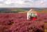 The Hut biedt u een akoestische oplossing voor op kantoor