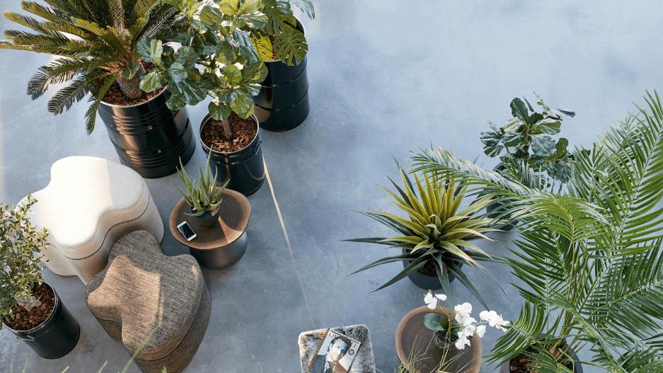 Planten op werkplek